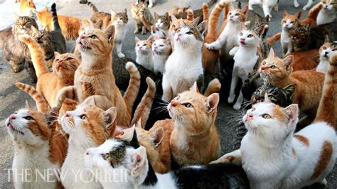 Why Humans Are Obsessed with Cats   Annals of Obsession
