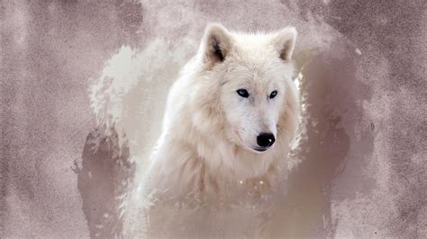 The Wolf Wallpapers | HD Wallpapers | ID #12164