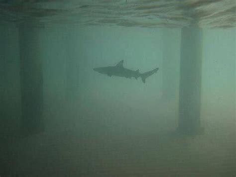 Thalassophobia Is A Real, Terrifying Thing And You
